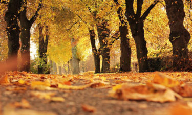 autumn leaves in Pennsylvania