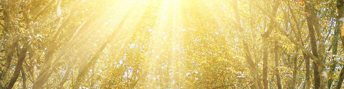 the sun shines through trees